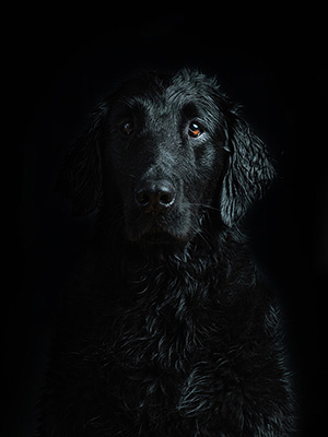 dog black wet